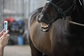 smiilng horses 17 (1)