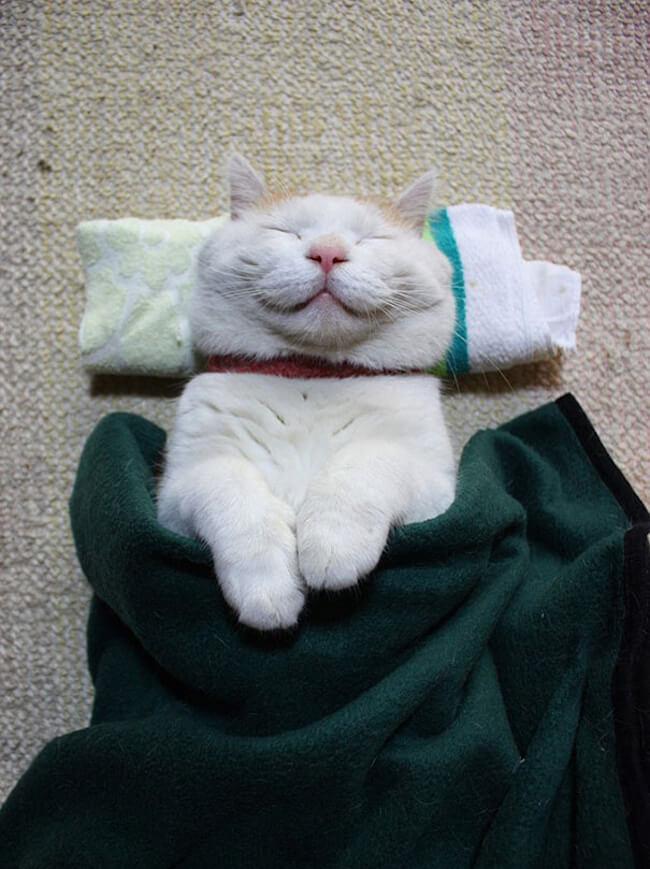 smiling cat 10