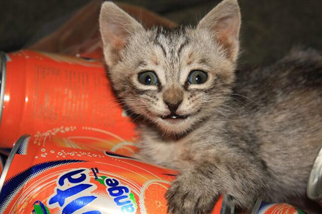 smiling kittens 16