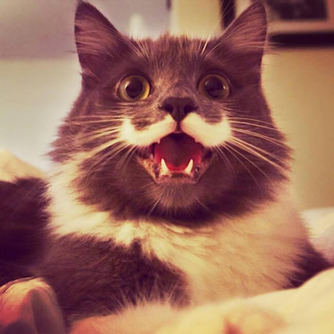 happy cats 23