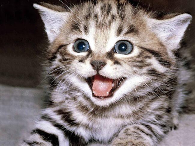 smiling animals 28