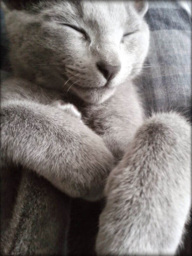 adorable cats 47