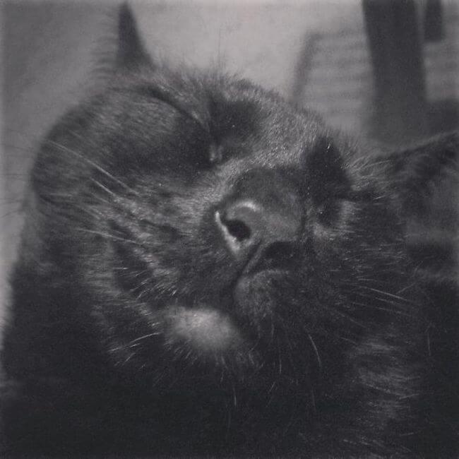 cute cats 51