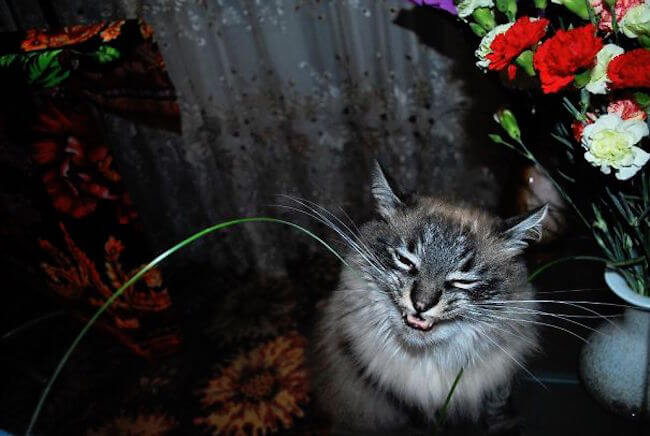 lovable cats 56