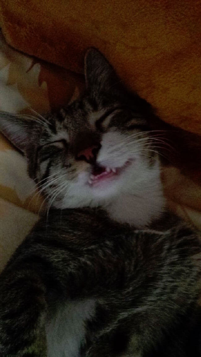smile cats 84