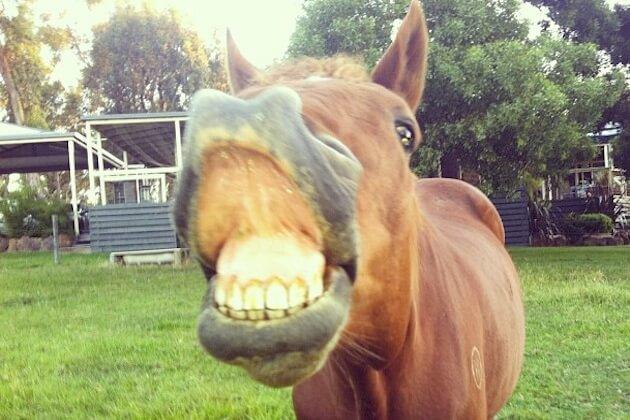 smiling horses 1 (1)
