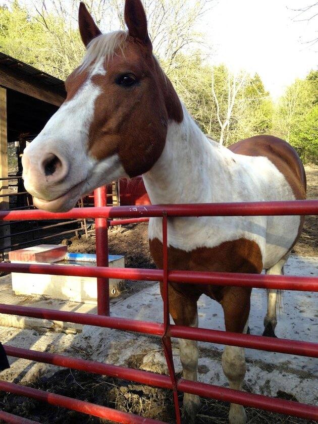 smiling horses 2 (1)