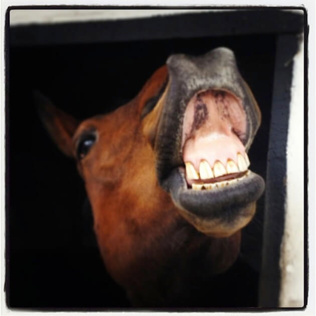 smiling horses 3 (1)