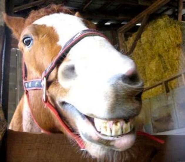 smiling horse 4 (1)