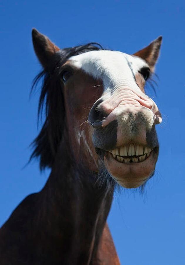 horses smiling pics 9 (1)
