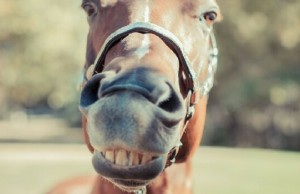 smiling horses feat (1)