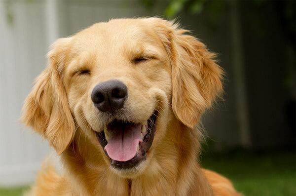 super cute dogs 12 (1)