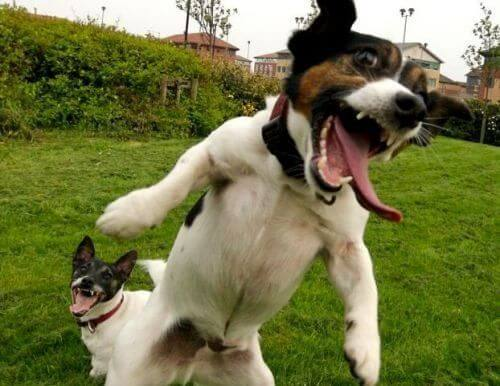 epic happy dogs 14 (1)