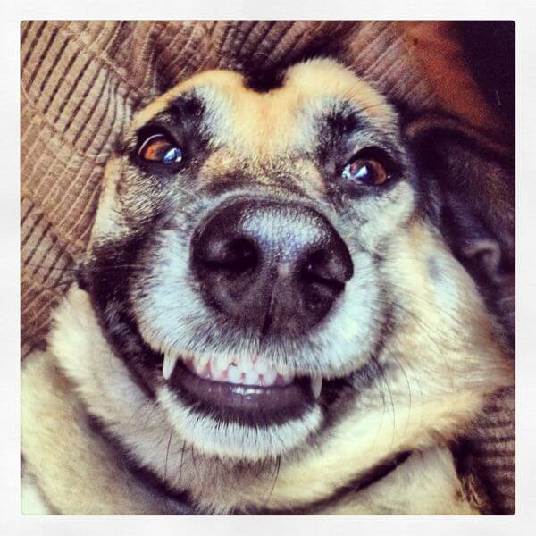 super smiling dogs 23 (1)