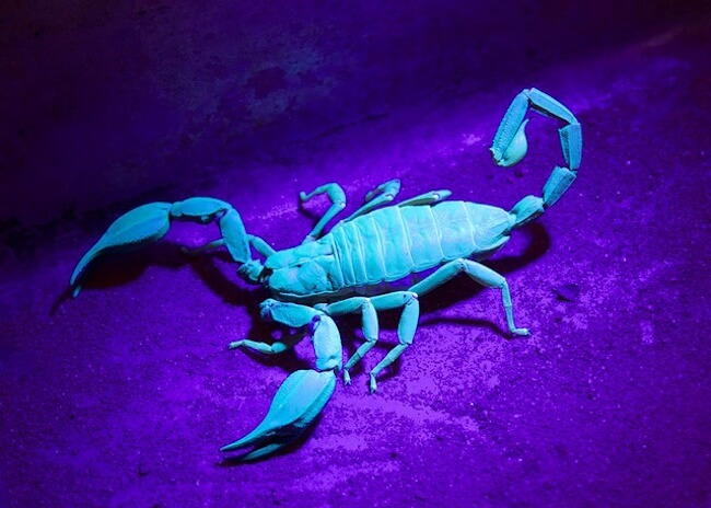 objects that glow under uv light 23 (1)