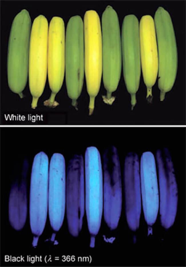 stuff that glow under uv light 9 (1)