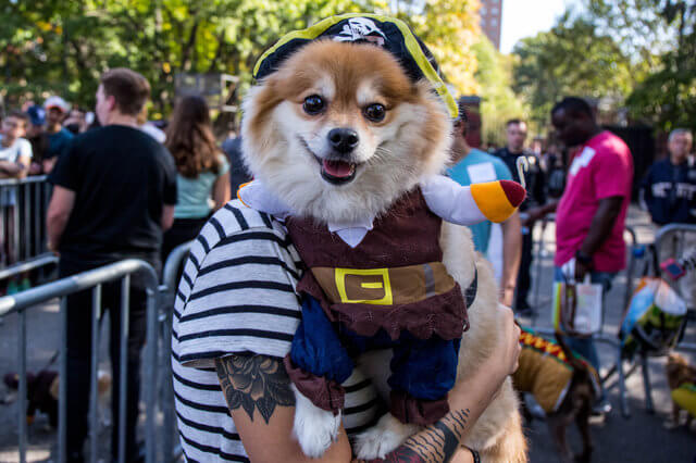 All The Dogs from 2017 Tompkins Square Halloween Parade 10 (1)
