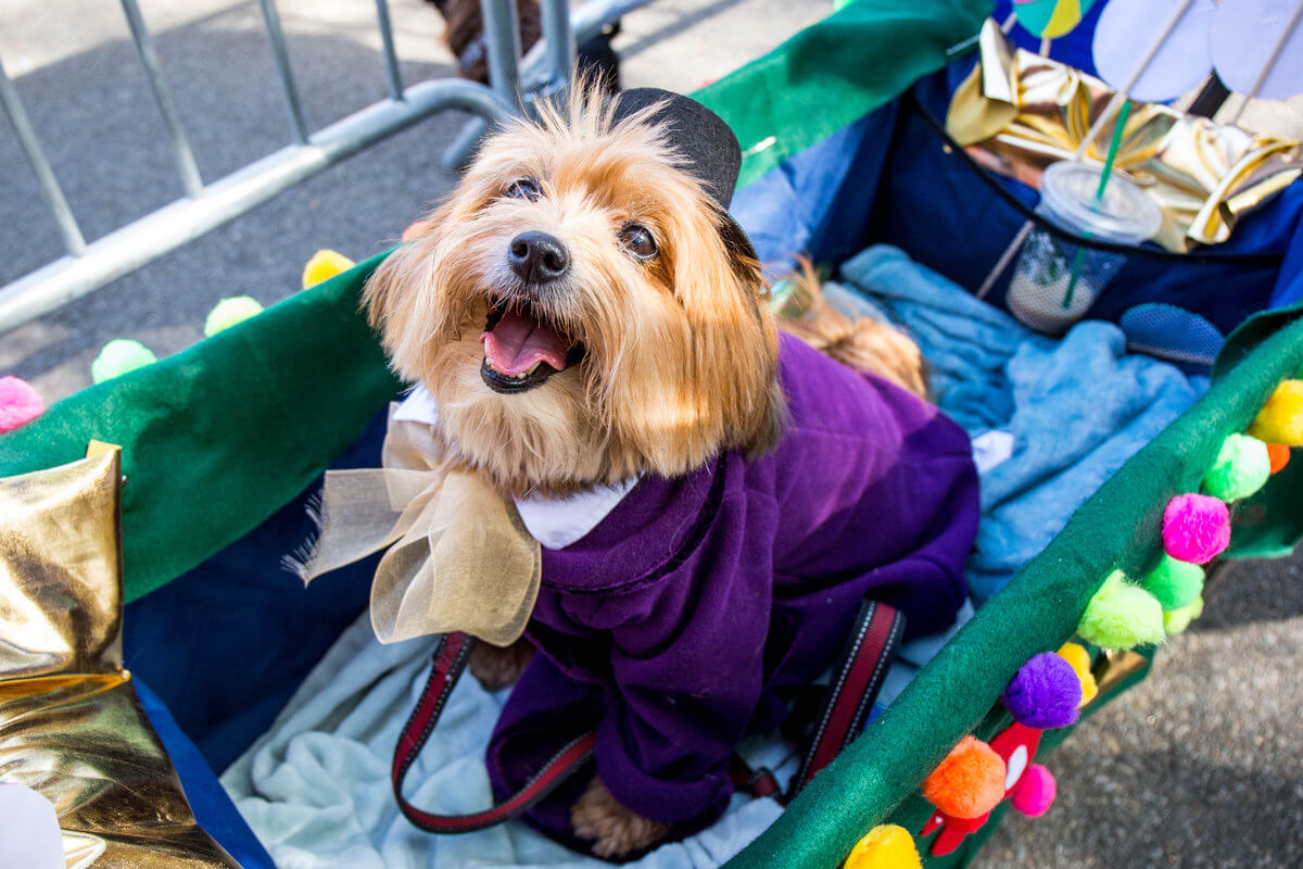 All The Dogs from 2017 Tompkins Square Halloween Parade 14 (1)