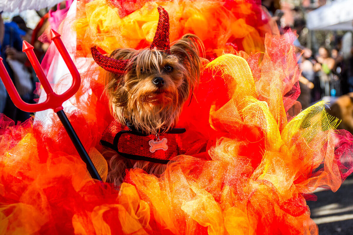 All The Dogs from 2017 Tompkins Square Halloween Parade 15 (1)