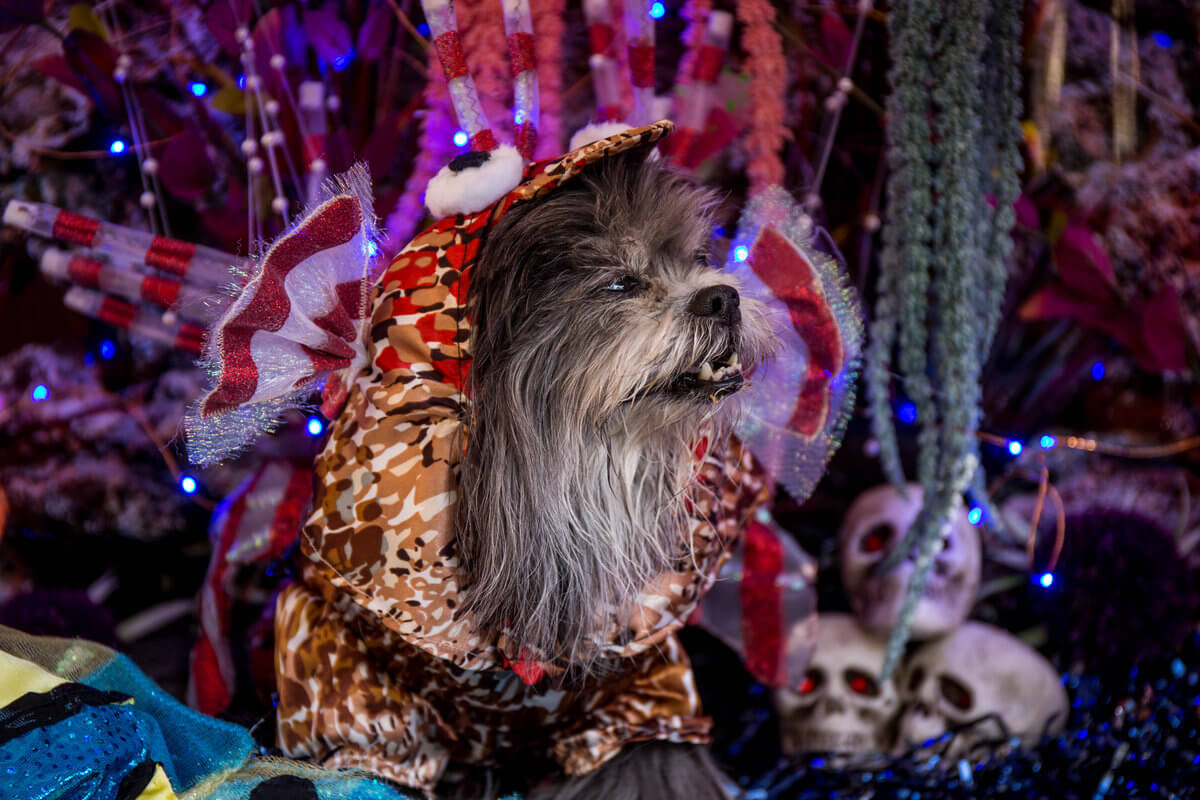 All The Dogs from 2017 Tompkins Square Halloween Parade 17 (1)
