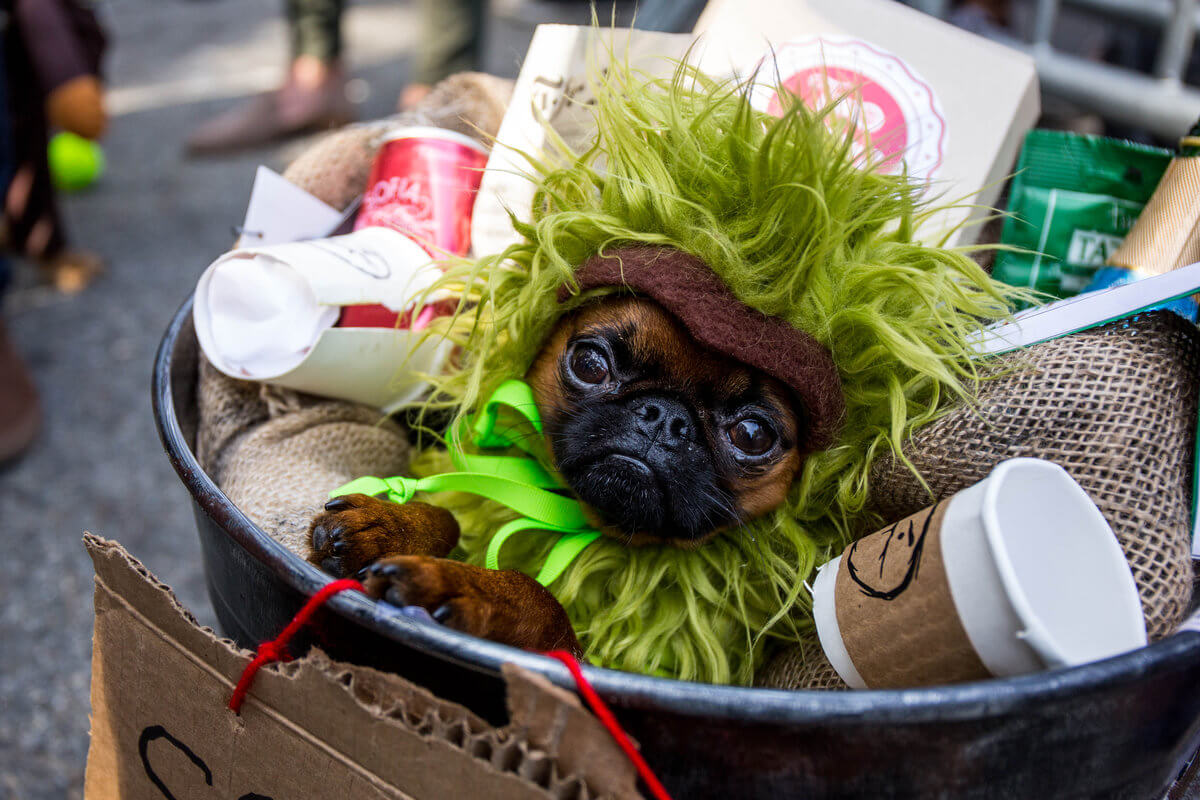 All The Dogs from 2017 Tompkins Square Halloween Parade 18 (1)