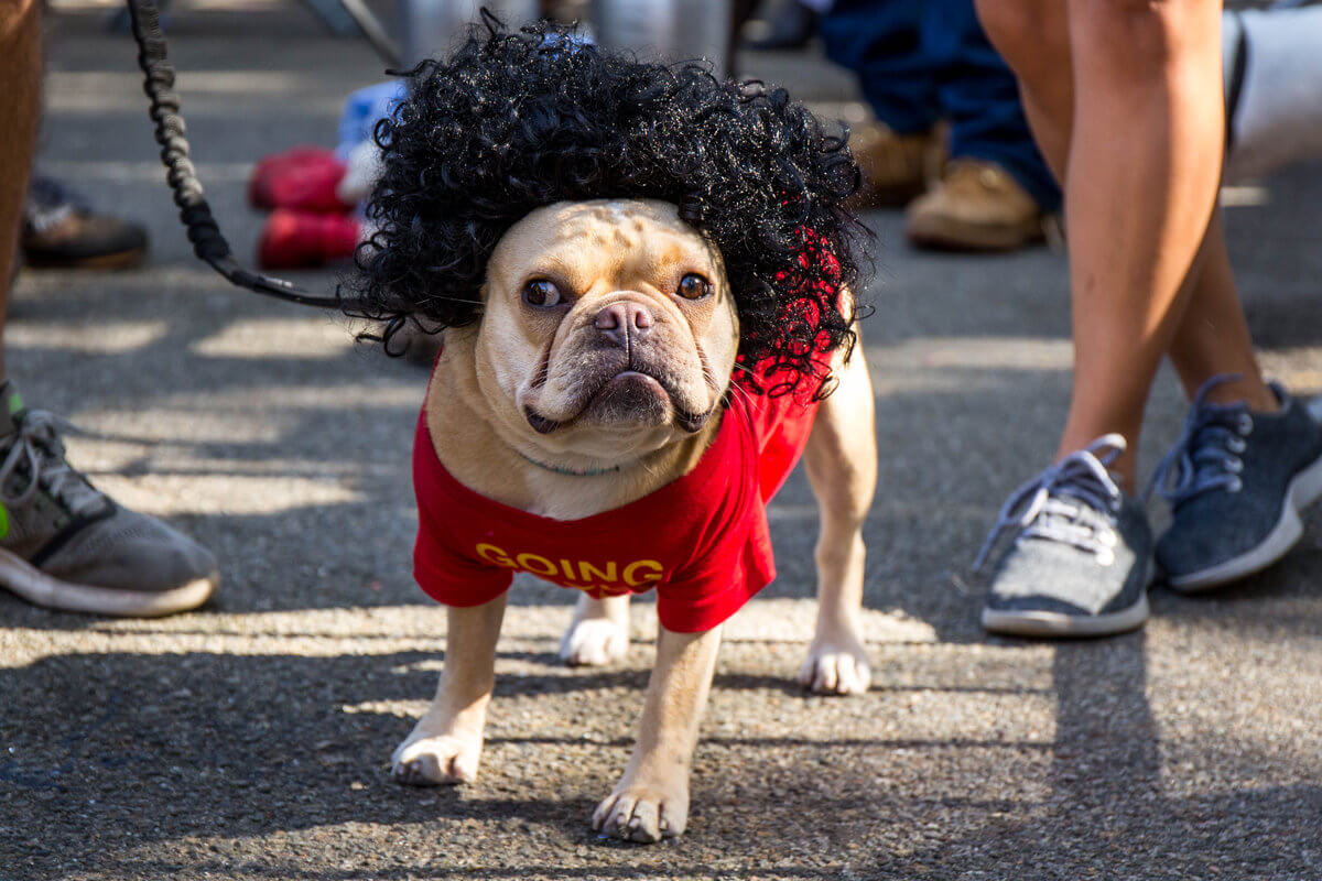 All The Dogs from 2017 Tompkins Square Halloween Parade 20 (1)