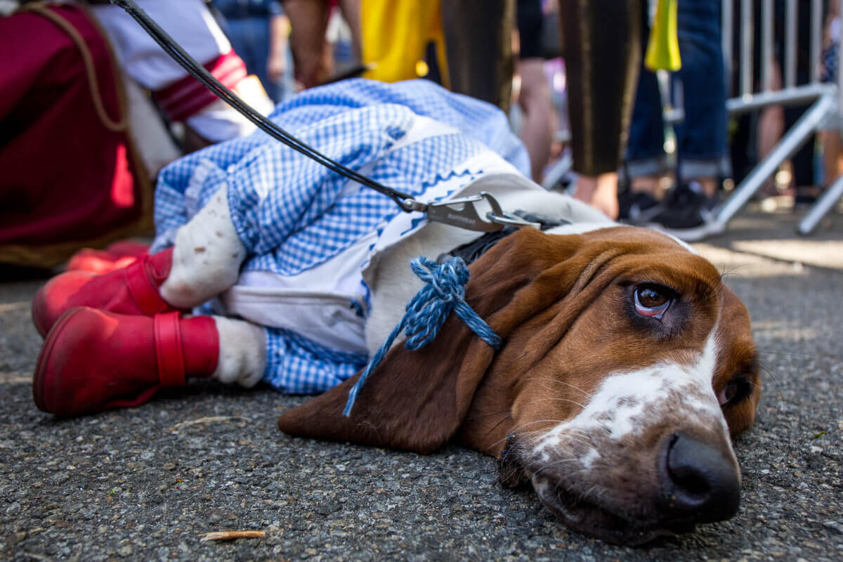 All The Dogs from 2017 Tompkins Square Halloween Parade 21 (1)