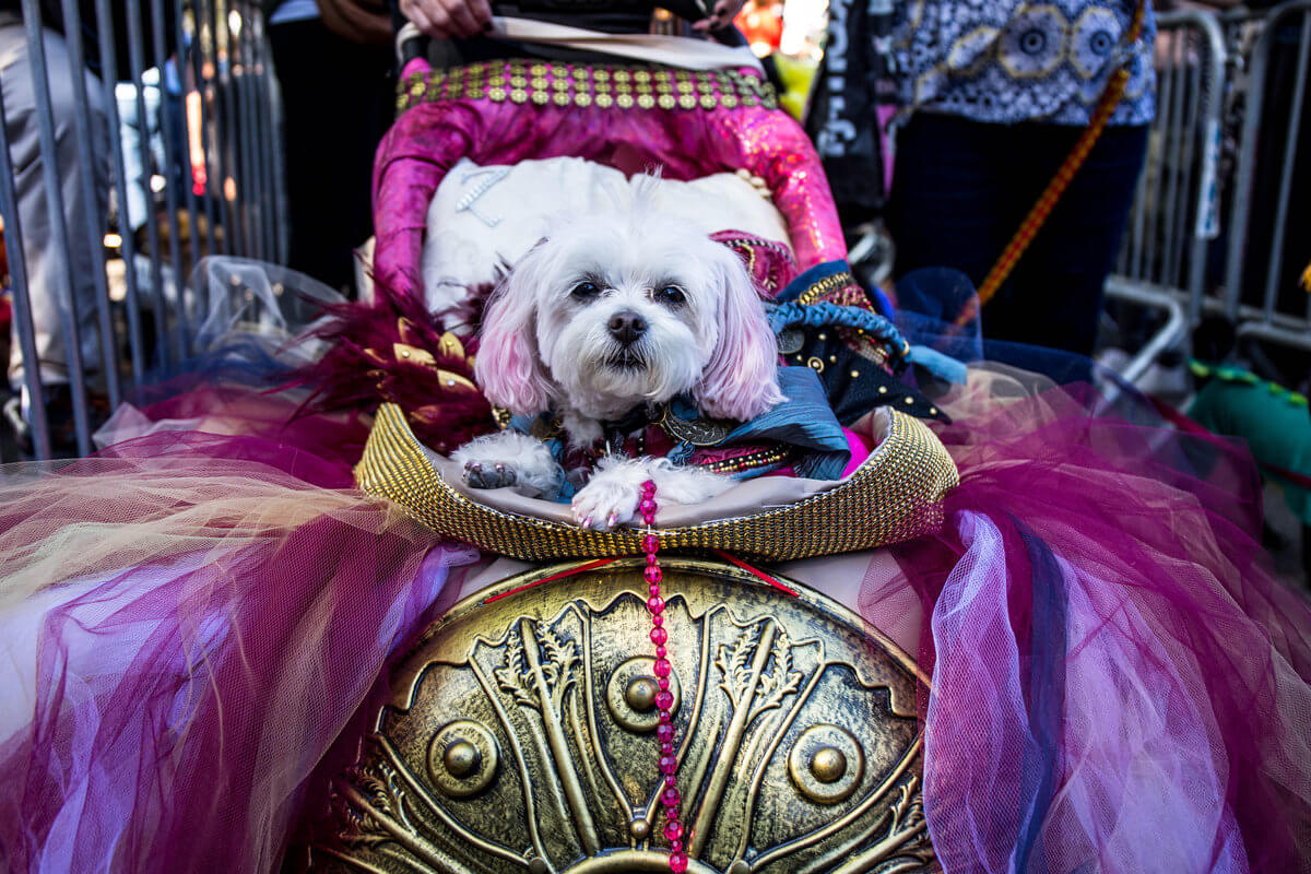 All The Dogs from 2017 Tompkins Square Halloween Parade 22 (1)