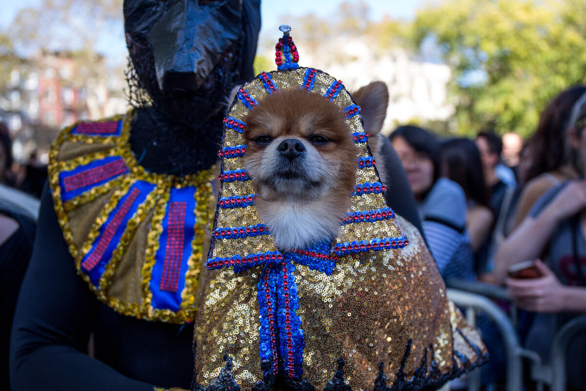 All The Dogs from 2017 Tompkins Square Halloween Parade 23 (1)