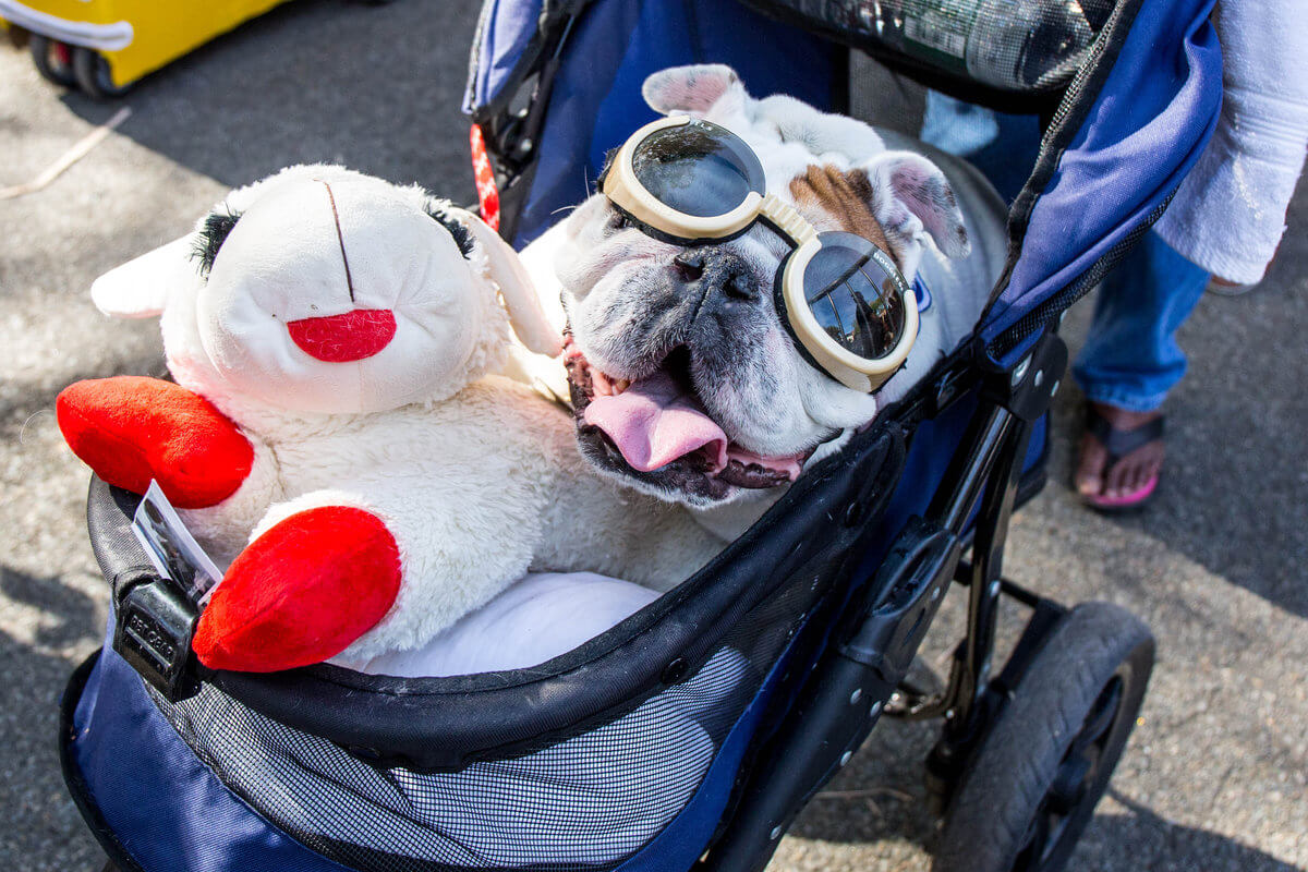 All The Dogs from 2017 Tompkins Square Halloween Parade 25 (1)