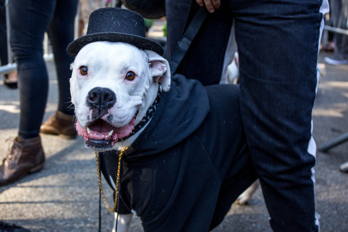 All The Dogs from 2017 Tompkins Square Halloween Parade 26 (1)