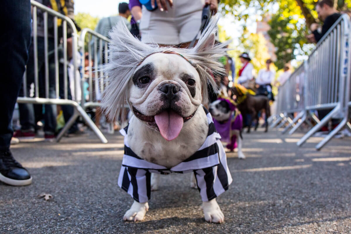 All The Dogs from 2017 Tompkins Square Halloween Parade 29 (1)
