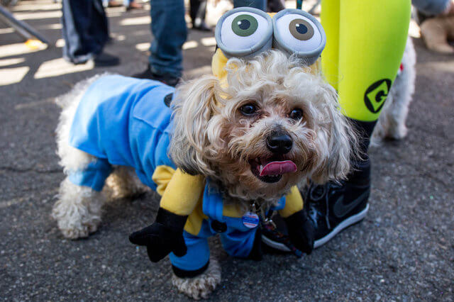 All The Dogs from 2017 Tompkins Square Halloween Parade 8 (1)
