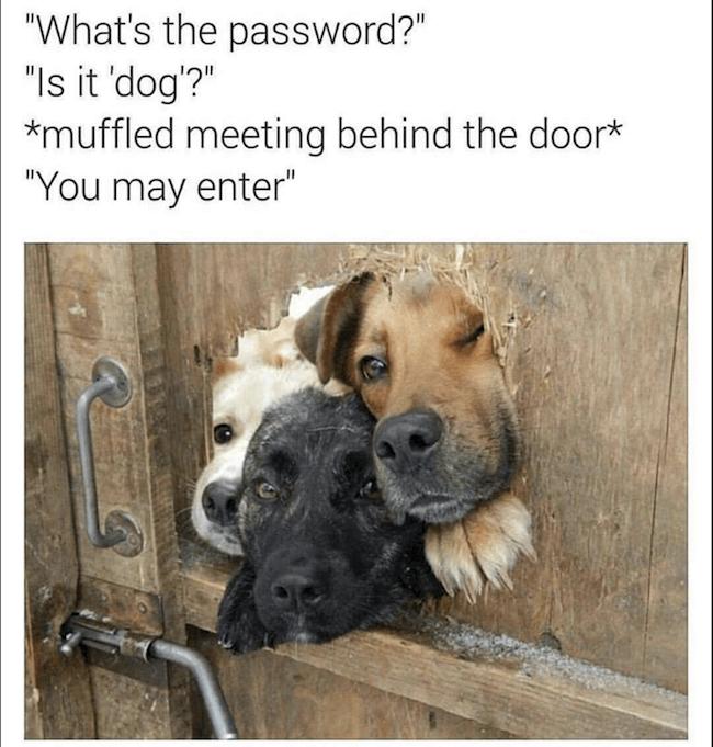 pet Memes 13 (1)