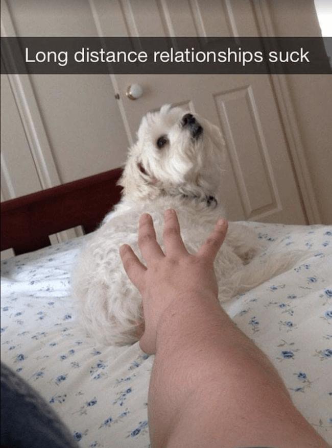 pet Memes 14 (1)