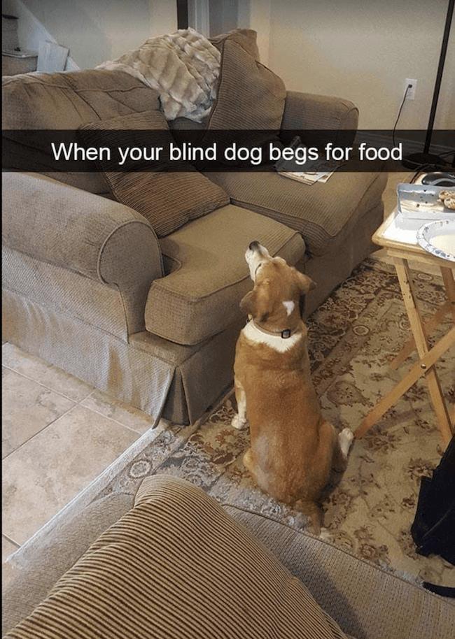 animal Memes 15 (1)