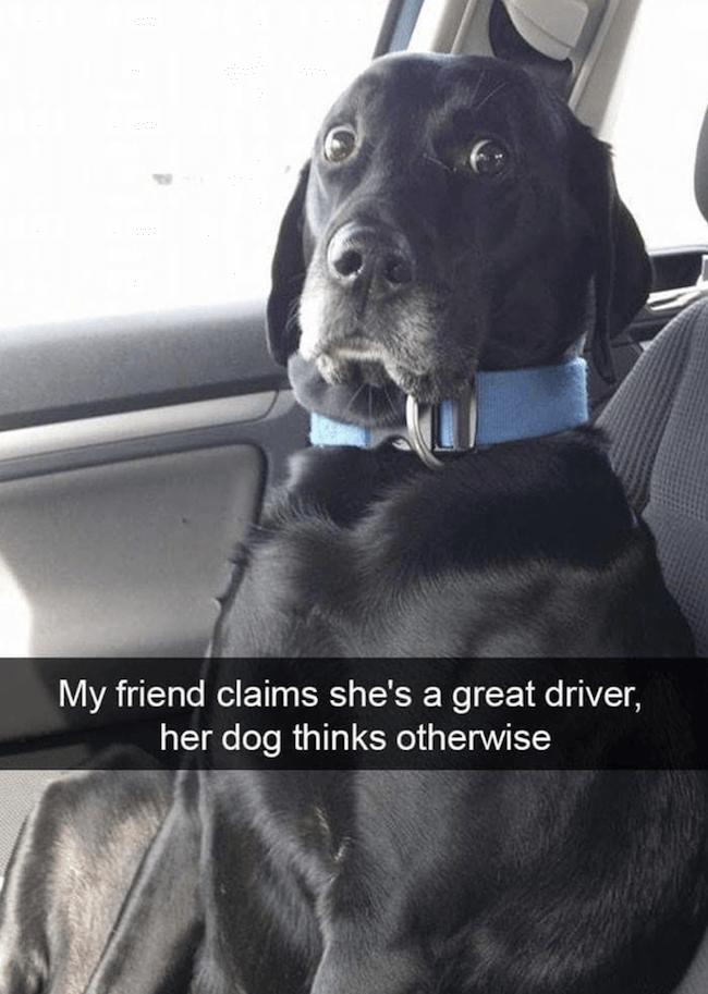 cute dogs Memes 21 (1)