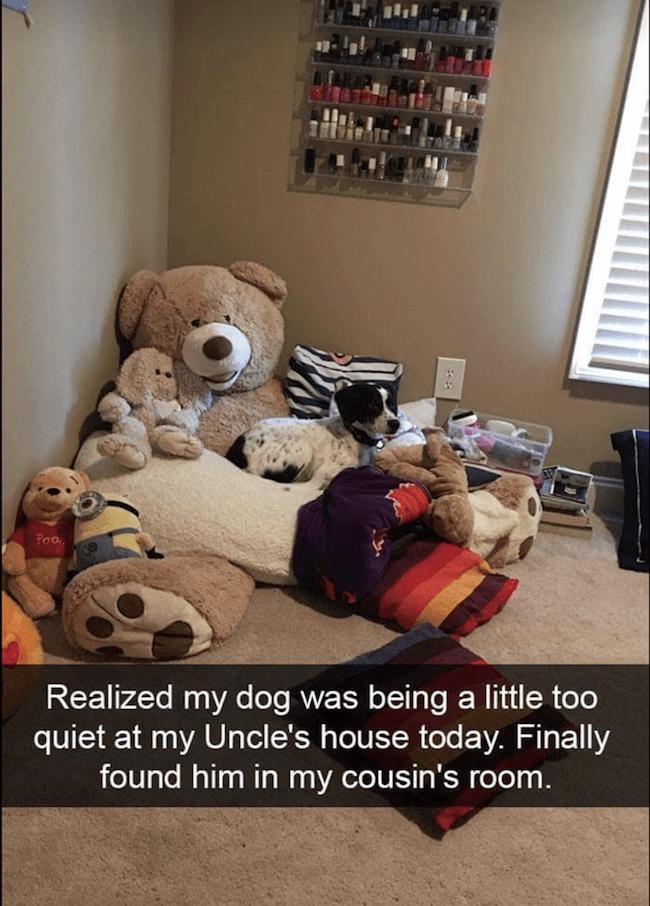 cute dogs Memes 22 (1)