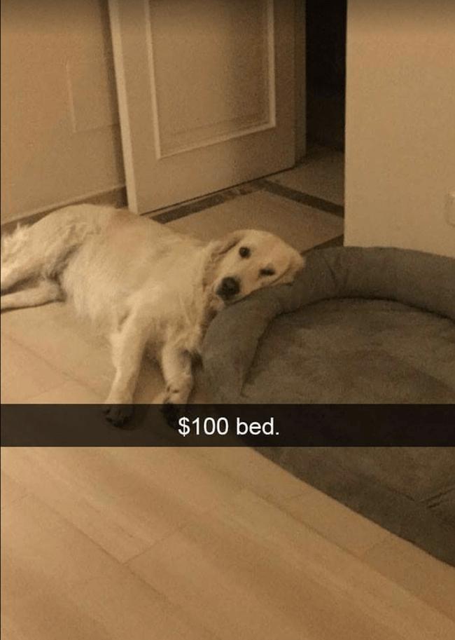 cute dogs Memes 24 (1)