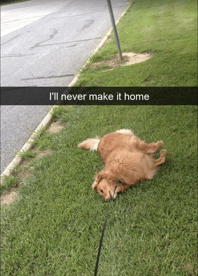 cute dogs Memes 25 (1)