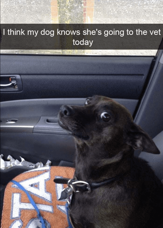 Doggo pictures 27 (1)