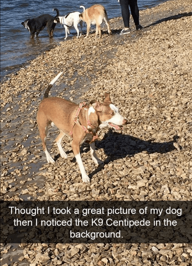 Doggo pictures 29 (1)