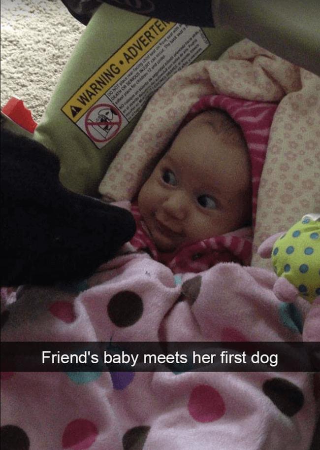 Doggo pictures 30 (1)