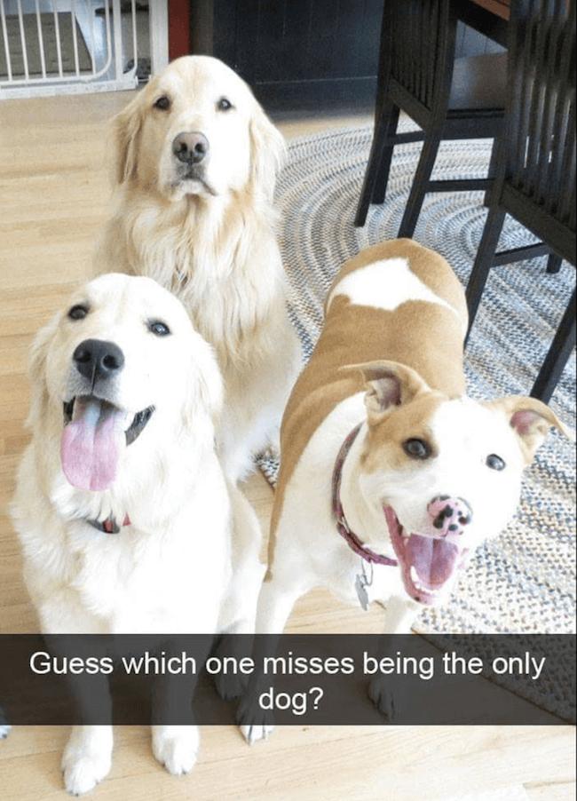 Doggo pictures 31 (1)