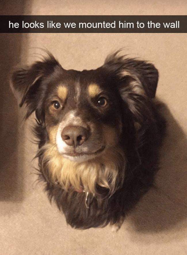 Doggo images 33 (1)