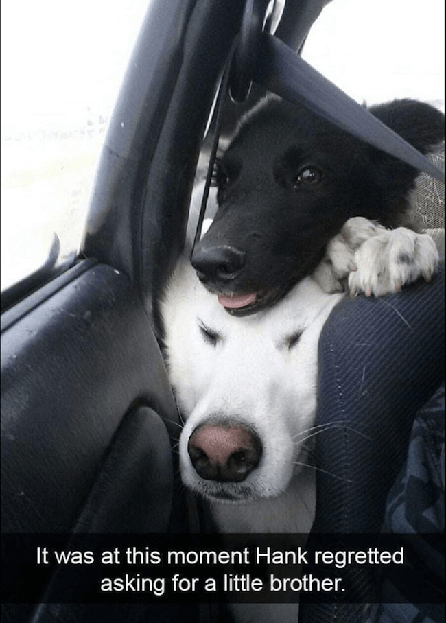 Doggo images 34 (1)