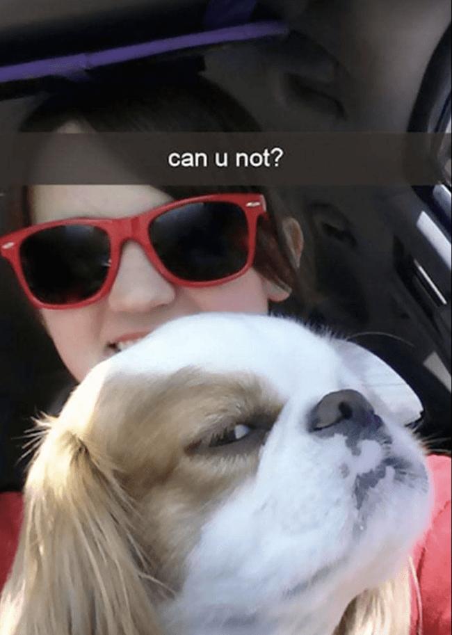 Doggo images 37 (1)