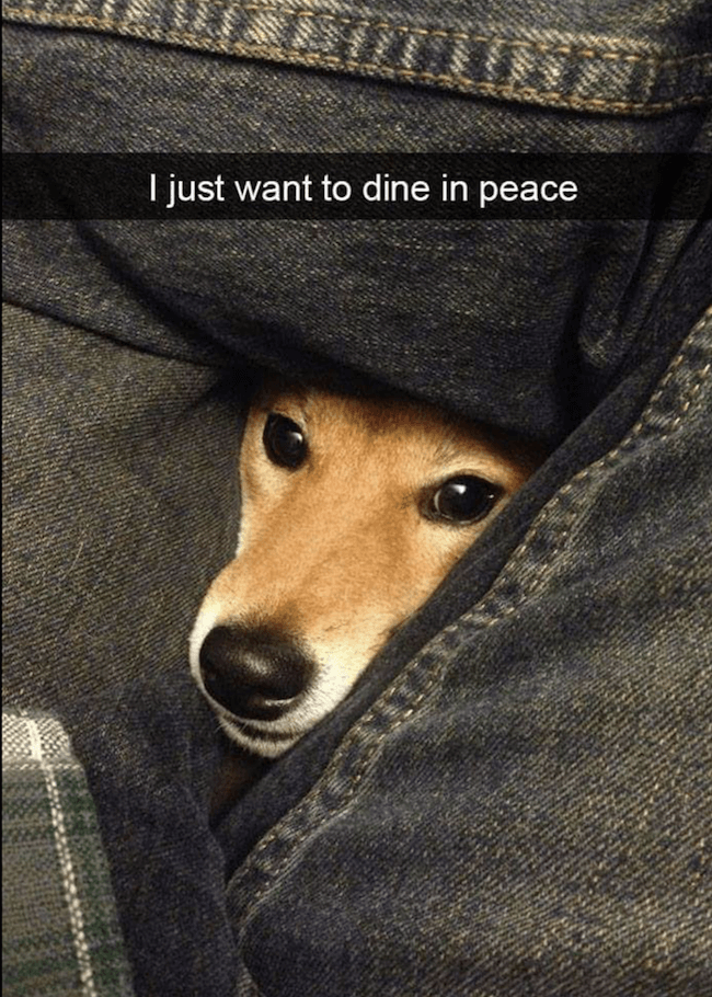 dog Memes 8 (1)