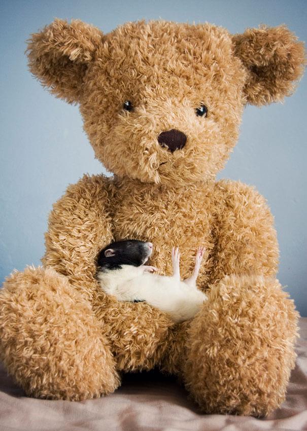 Rats With Teddy Bears ellen van deelen jessica florence 12 (1)