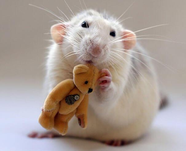 Rats With Teddy Bears ellen van deelen jessica florence 16 (1)